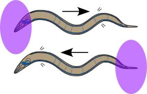 UV That Worm
