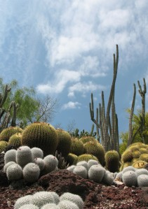 032_Cactuscape_2