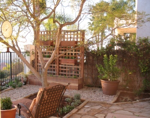 Trellis and Lime Tree