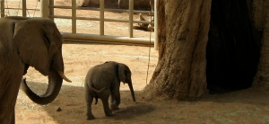 Who doesn't love baby elephants?