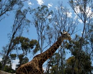 Tall stalks