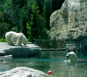 d-33 Even Polar Bears Love San Diego