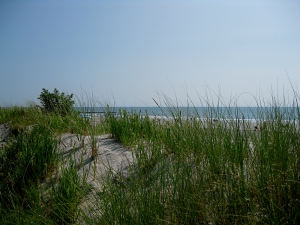Dunes at Sea Isle