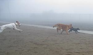 Fog Chase