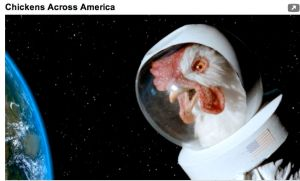 Chickens Across America