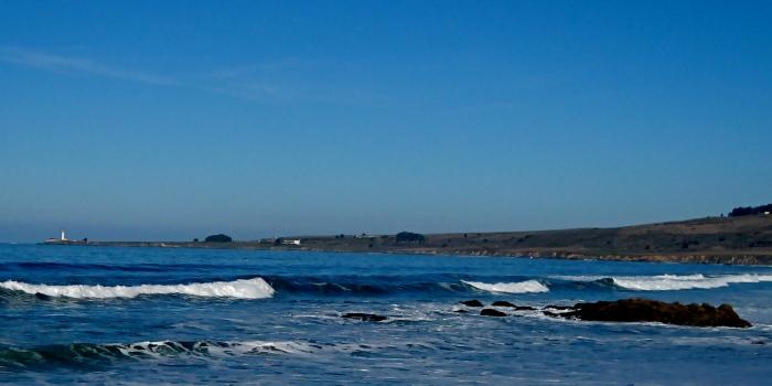 Ano Neuvo Coast
