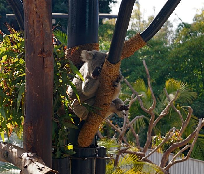 Koala Sleeping Zone